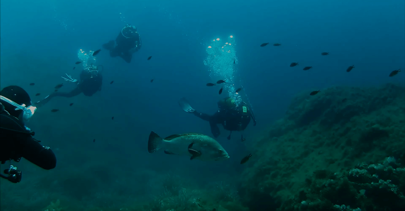 Spécialité Deep Diver (Profondeur) PADI